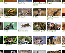 The BBC Animals page